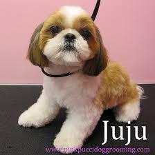 shih tzu haircuts cute hairstyles beautiful cute puppy hairstyles cute puppy