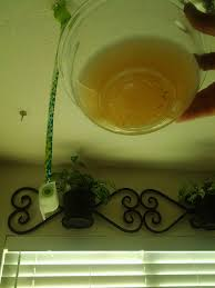 Homemade Fly Trap by Store Bought Fly Trap Vs Homemade Diy Version Holistic Wife Life