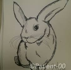 unrealistic rabbit sketch by patient 00 on deviantart