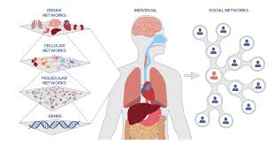 Picture Human Body What Is Systems Biology Institute For Systems Biology