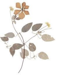 Dry Flowers 56 Best Cards Dried Flowers Images On Pinterest Dried Flowers