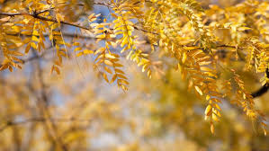 drought tolerant trees in summer months arbor day