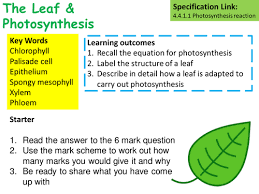 aqa b2 6 photosynthesis and its limiting factors by jedwards487