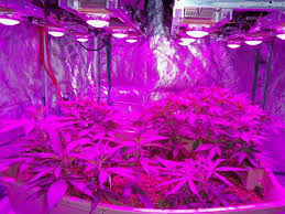 most efficient grow light how do led grow lights thermal management work adsence dollar