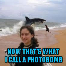 Funny Shark Meme - just another day at shark beach imgflip