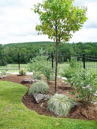 Backyard Gardening Ideas by Best 25 Low Maintenance Backyard Ideas On Pinterest Low