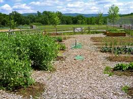 Plant Diseases Wikipedia - outline of organic gardening and farming wikipedia