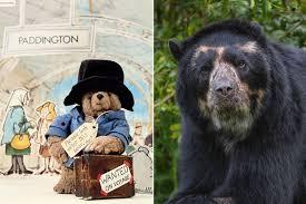 paddington bear movie views gossip pictures video