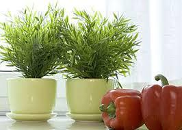 small indoor plants small and medium interior plants interior