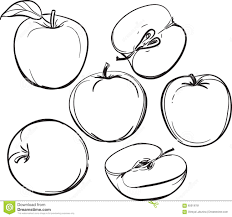 apple line drawing of apples on a white background one color