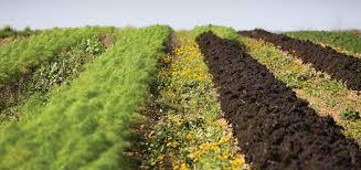 growing food crops in south texas growing