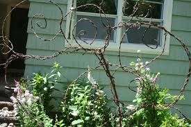 Rose Trellises Diy Barbed Wire Trellis A Mountain Hearth