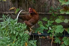 ny urban farming u2013 yellowtaste