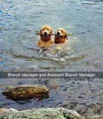 resume templates janitorial supervisor meme dog funny memes clean funny meme and quotes golden retriever dogs and puppies for dog