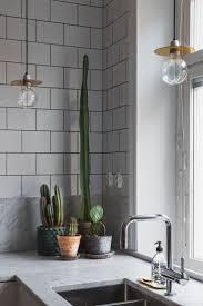 25 best indoor cactus ideas on pinterest cactus cactus plants