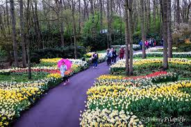 keukenhof flower gardens a day at the keukenhof gardens blue july stories