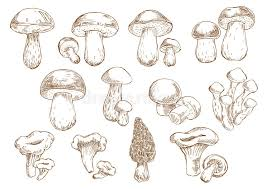 edible mushrooms sketch drawing icons stock vector image 70107043