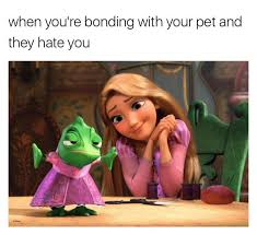 Meme Lol Com Wp Content - when you re bonding with your pet and they hate you funny cute