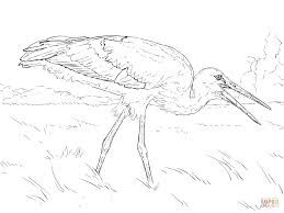 realistic white stork coloring page free printable coloring pages