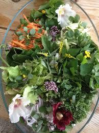 cuisiner les herbes sauvages salade d herbes sauvages mauves pimprenelle plantain égopode