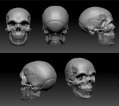 3d Head Anatomy Head Anatomy U2014 Polycount