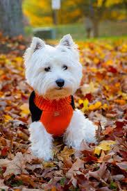 halloween pet background 72 best dog halloween costumes images on pinterest costumes pet