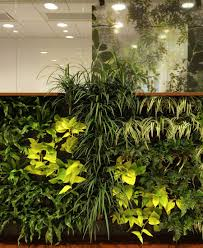 Interior Garden Plants by Decorating With Plants Indoors Indoor Plant Wall House Plants