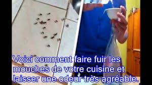 chasser les moucherons dans la cuisine voici comment faire fuir les mouches de votre cuisine et laisser