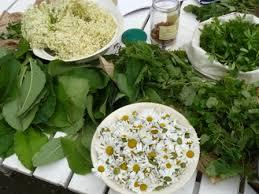 la cuisine des plantes sauvages cuisiner les plantes sauvages bien être au naturel