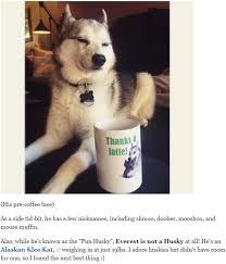 Pun Husky Meme - behind the meme everest the pun husky pun husky and meme