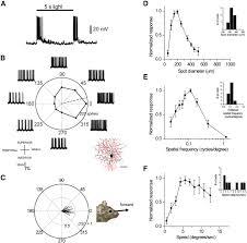 genetic dissection retinal inputs brainstem nuclei