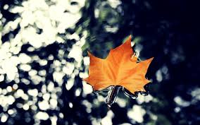 water leaf autumn nature 17154 wall paper