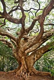 225 best trees images on nature plants and the tree