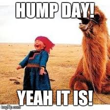 Camel Meme - happy girl and camel meme generator imgflip