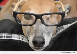 Dog With Glasses Meme - one eyed dog wearing glasses by ben meme center