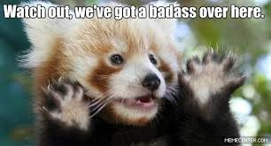 Red Panda Meme - baby red panda google search funny stuff pinterest baby red