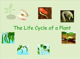 smart exchange usa plant life cycle