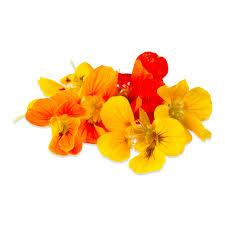 nasturtium flowers edible nasturtium flowers edible nasturtium leaves marx foods