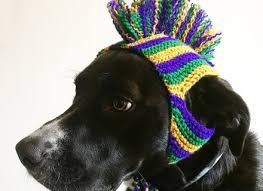 mardi gras dog collars from mardi gras dog costume korrectkritterscom