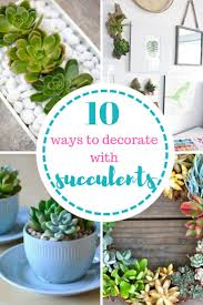 47 best succulents images on pinterest succulent plants