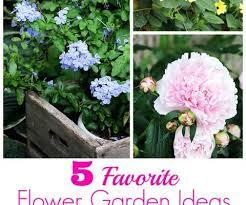 25 best blue beard shrub images on pinterest flowering shrubs