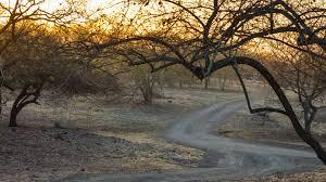 travel guide for gir national park gujarat