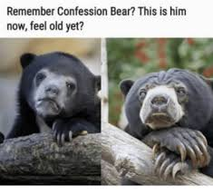 Hairless Bear Meme - remember confession bear this is him now feel old yet bear