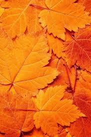 25 autumn leaves ideas autumn photography