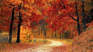 autumn music beautiful forest fall colors relaxing flute music