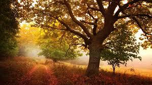 themes com windows 10 autumn themes etame mibawa co
