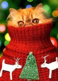 Merry Christmas Cat Meme - happy christmas with animals cute animal pictures and videos blog
