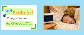 Bed Bug Interceptor Climbup Monitor For Bed Bugs Insect Interceptor