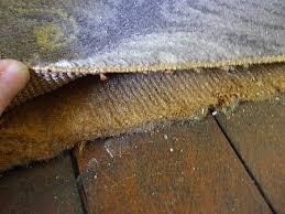 Rubber Rug Backing Asbestos In Carpets Asbestos Global