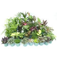 Easy Care Indoor Plants 130mm Easy Care Assorted Indoor Plants I N 3615024 Bunnings